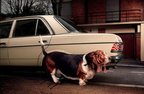 Wad-Gros-chien